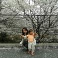 2007春 桜(新百合ヶ丘)