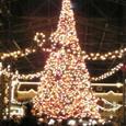 舞浜のテーマパークのツリー Night