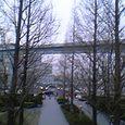 都会の並木道